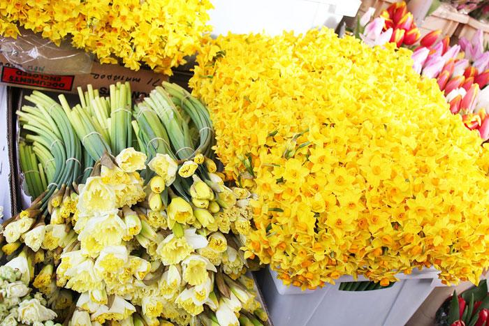 Нарциссы - букет на 8 Марта, желтые, лимонные