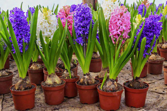 Название букеты из живых цветов к 8 марта — pic 14