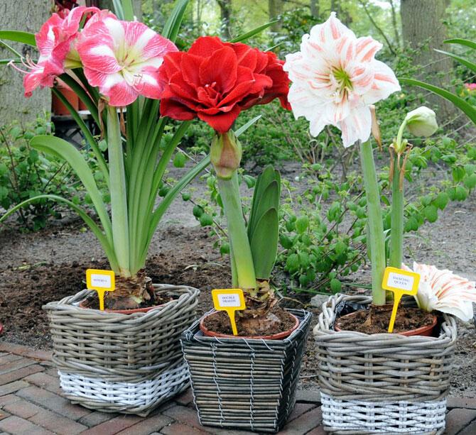 На 8 марта какие цветы дарят