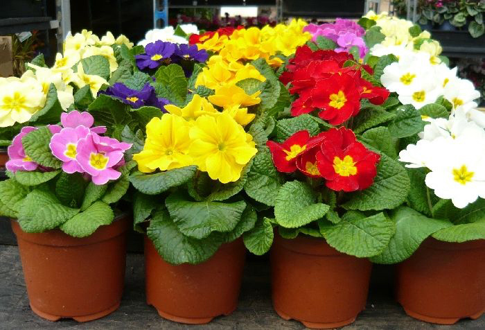 Название букеты из живых цветов к 8 марта цветы купить