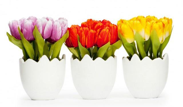 Тюльпаны в горшках на 8 Марта, цветы в горшках на праздник, желтые, красные