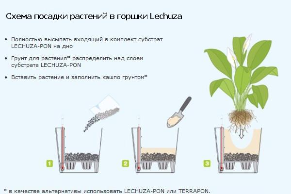 Схема посадки в горшки Lechuza