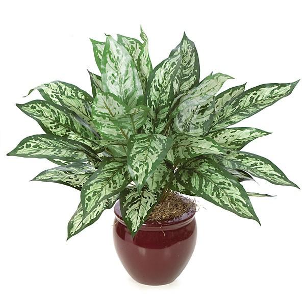 Комнатные цветы лиственные фото