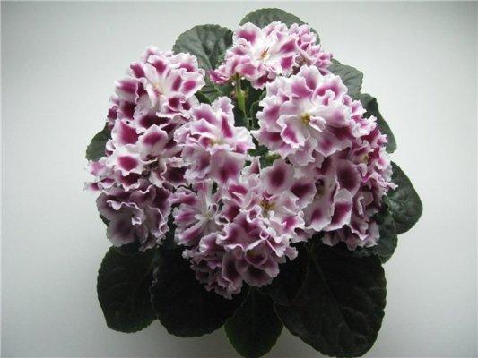 Купить цветы днепропетровска центре #9