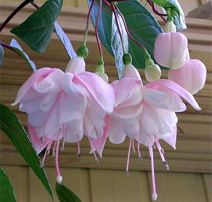 Где заказать комнатные цветы почтой купить оптом искусственные цветы со склада в днепропетровске