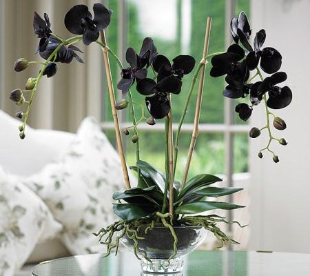 Орхидея черная цветы 88