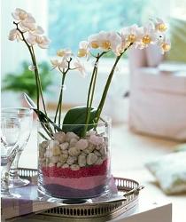 Стеклянный горшок для орхидеи купить - fce1b