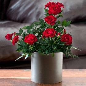 каталог комнатных цветов с фото и названиями