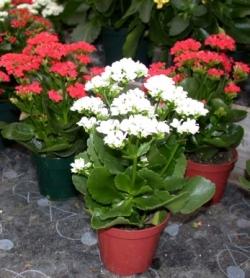 Растения и дети комнатные растения