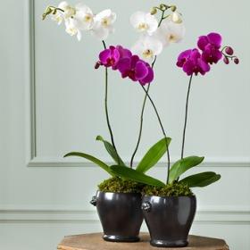 Фото экзотических комнатных цветов с