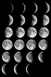 Лунный календарь для комнатных