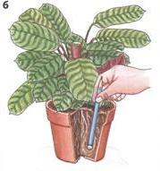 Подкормка комнатных растений, удобрения для растений, подкормка растений, комнатные растения
