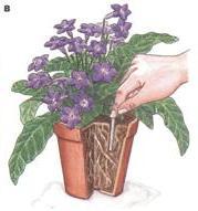 Подкормка комнатных растений, подкормка растений, удобрения для растений, комнатные растения